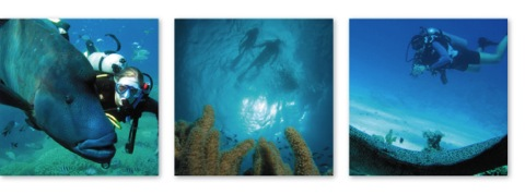 Port Douglas scuba diving trips