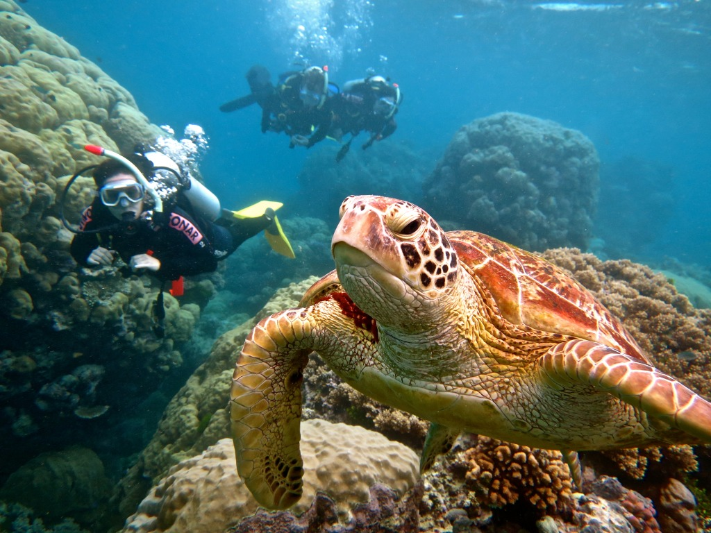PADI Open Water course Port Douglas