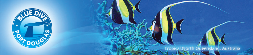 Blue Dive banner fish