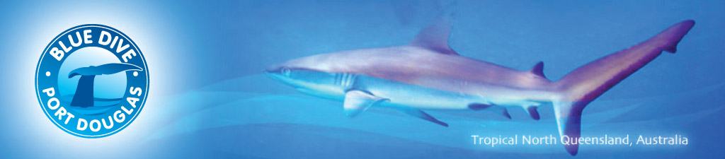 Blue Dive reef shark