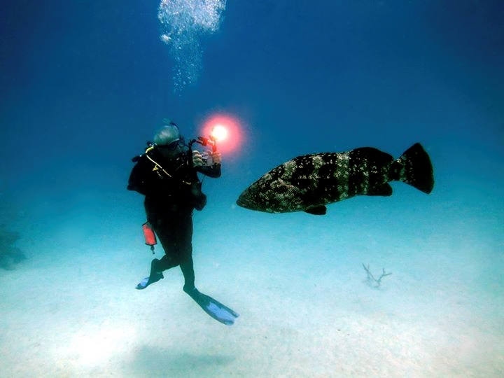 PADI Underater photogtapher