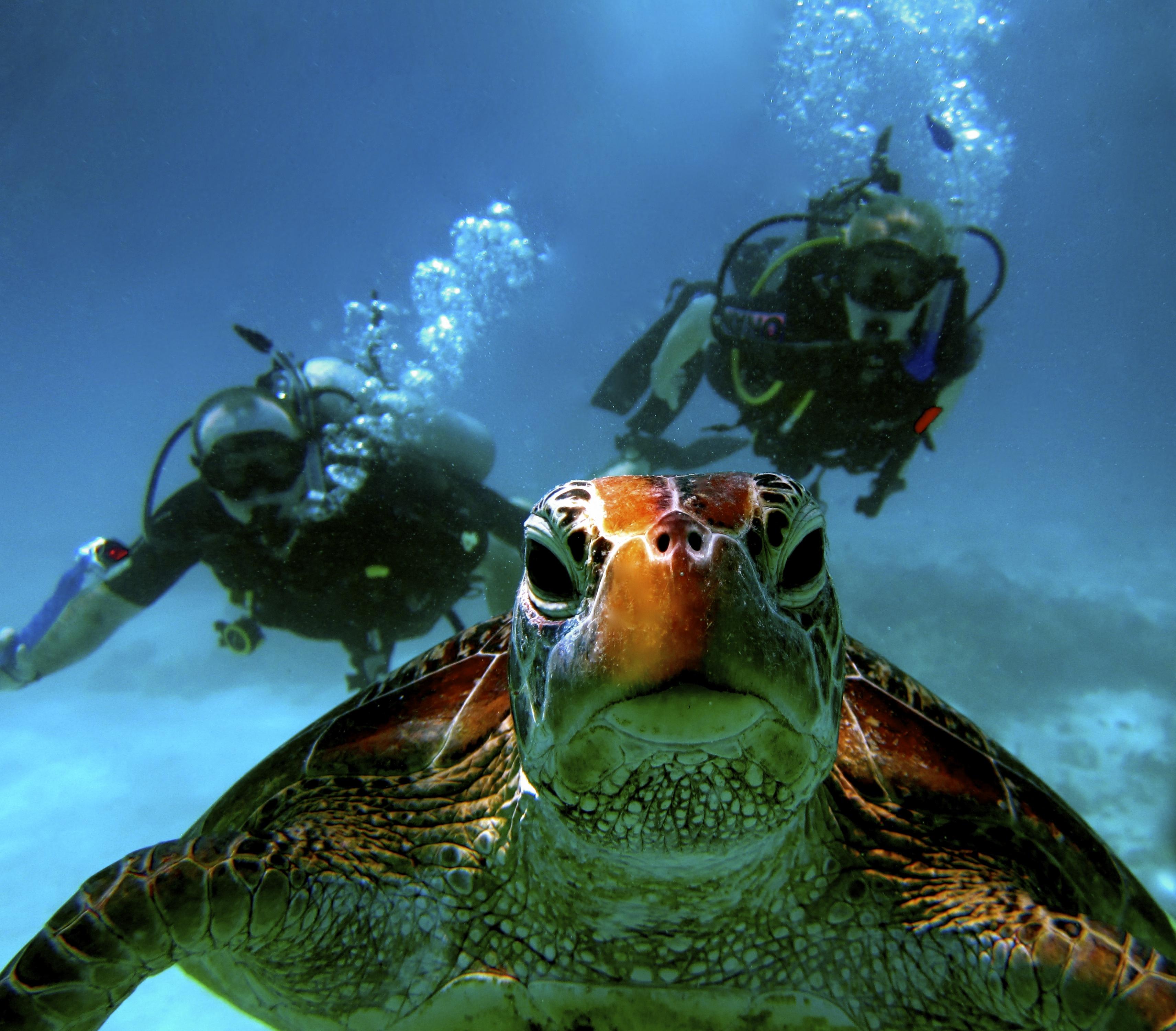 Scuba diving in port douglas blue dive - Dive dive dive ...