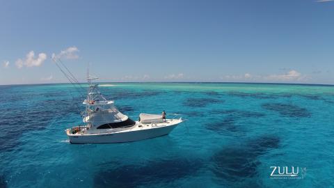 Zulu on the Great Barrier Reef